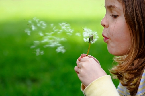 Girl blowing dandelion in the green spring grass